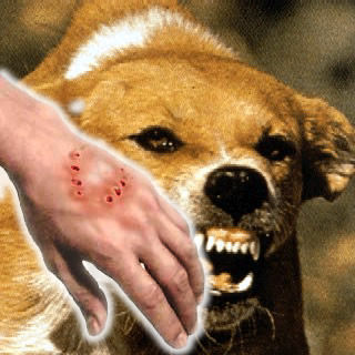 human_rabies
